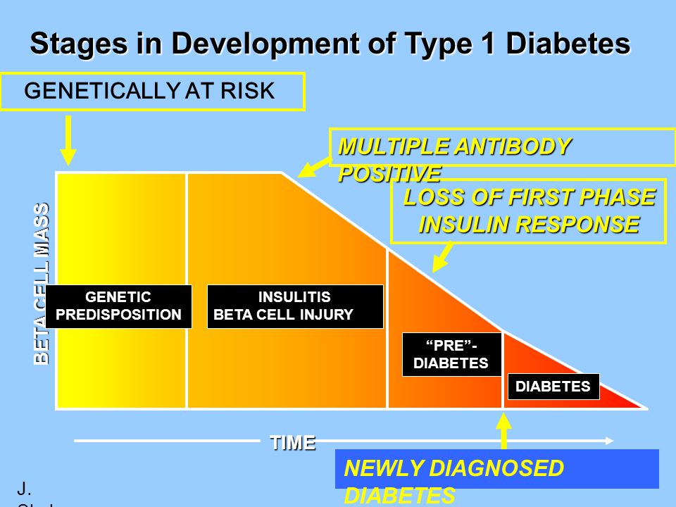 "LOSS OF FIRST PHASE INSULIN RESPONSE TIME Stages in Development of Type 1 Diabetes BETA CELL MASS DIABETES ""PRE""- DIABETES GENETIC PREDISPOSITION INSU"