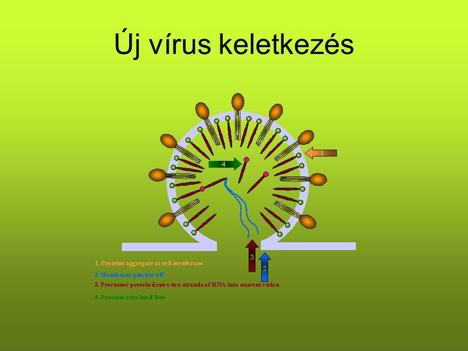 Új vírus keletkezés