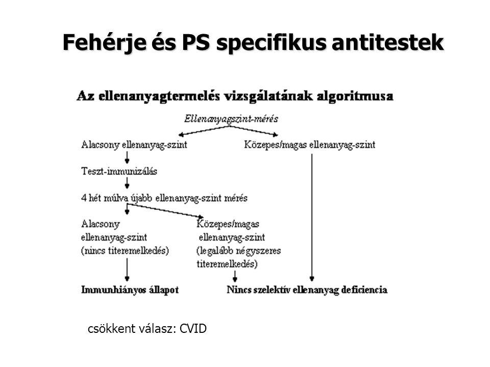 Fehérje és PS specifikus antitestek csökkent válasz: CVID