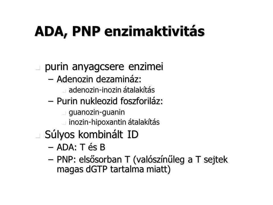 ADA, PNP enzimaktivitás purin anyagcsere enzimei purin anyagcsere enzimei –Adenozin dezamináz: adenozin-inozin átalakítás adenozin-inozin átalakítás –