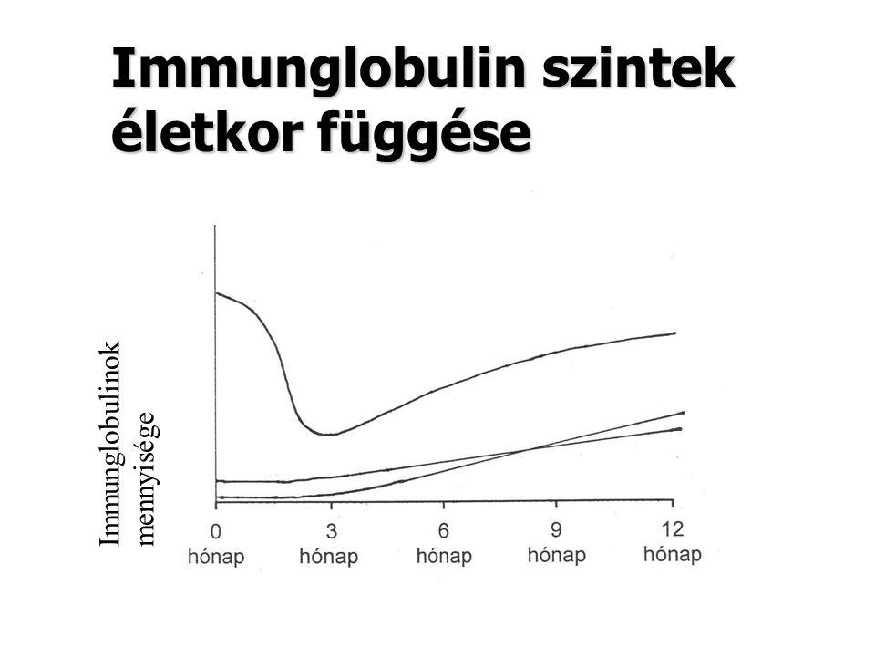Immunglobulin szintek életkor függése Immunglobulinok mennyisége IgG Ig M IgA