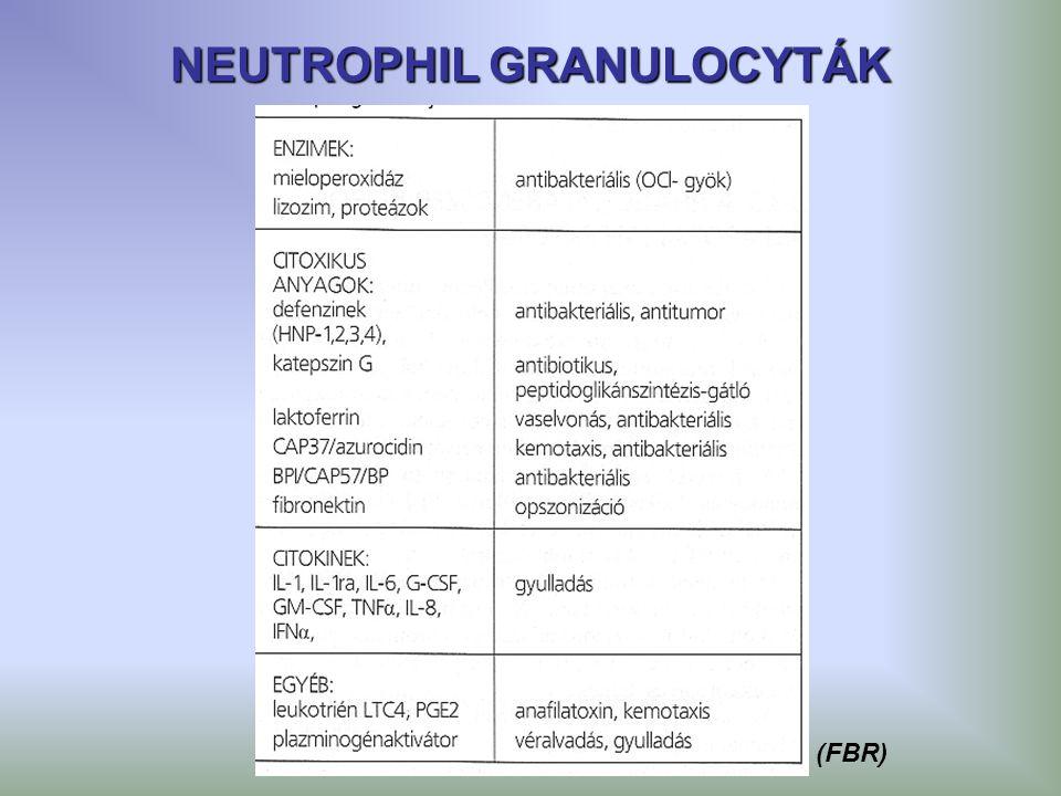 NEUTROPHIL GRANULOCYTÁK (FBR)