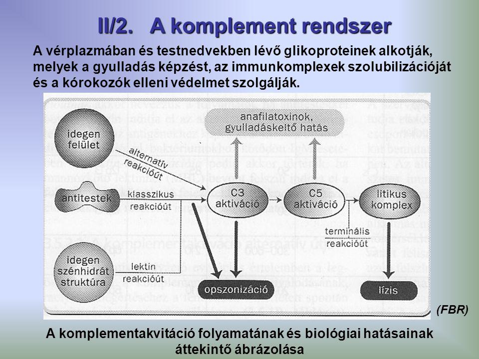 A vérplazmában és testnedvekben lévő glikoproteinek alkotják, melyek a gyulladás képzést, az immunkomplexek szolubilizációját és a kórokozók elleni vé