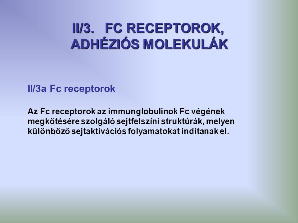 II/3. FC RECEPTOROK, ADHÉZIÓS MOLEKULÁK II/3a Fc receptorok Az Fc receptorok az immunglobulinok Fc végének megkötésére szolgáló sejtfelszíni struktúrá