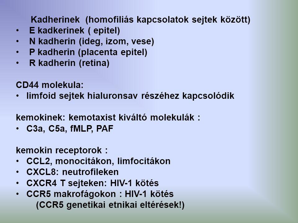Kadherinek (homofiliás kapcsolatok sejtek között) E kadkerinek ( epitel) N kadherin (ideg, izom, vese) P kadherin (placenta epitel) R kadherin (retina