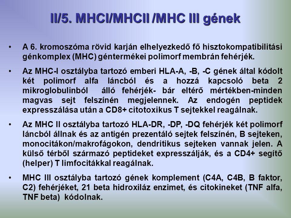 A 6. kromoszóma rövid karján elhelyezkedő fő hisztokompatibilitási génkomplex (MHC) géntermékei polimorf membrán fehérjék. Az MHC-I osztályba tartozó