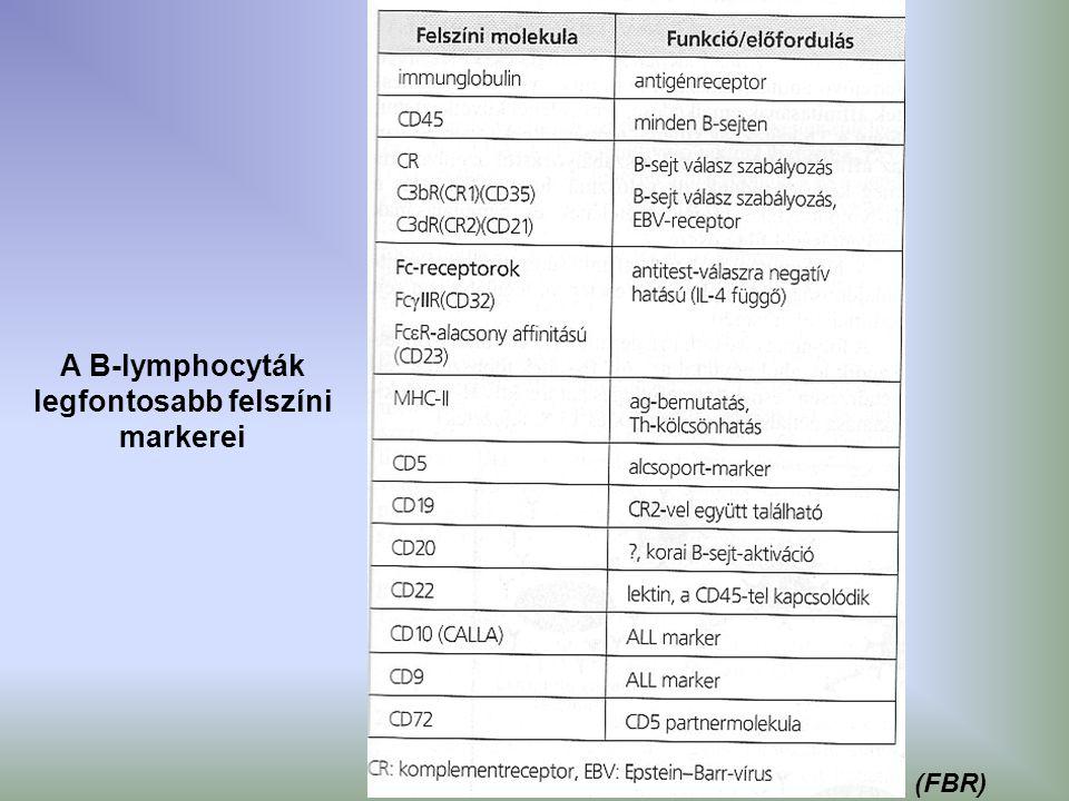 A B-lymphocyták legfontosabb felszíni markerei (FBR)
