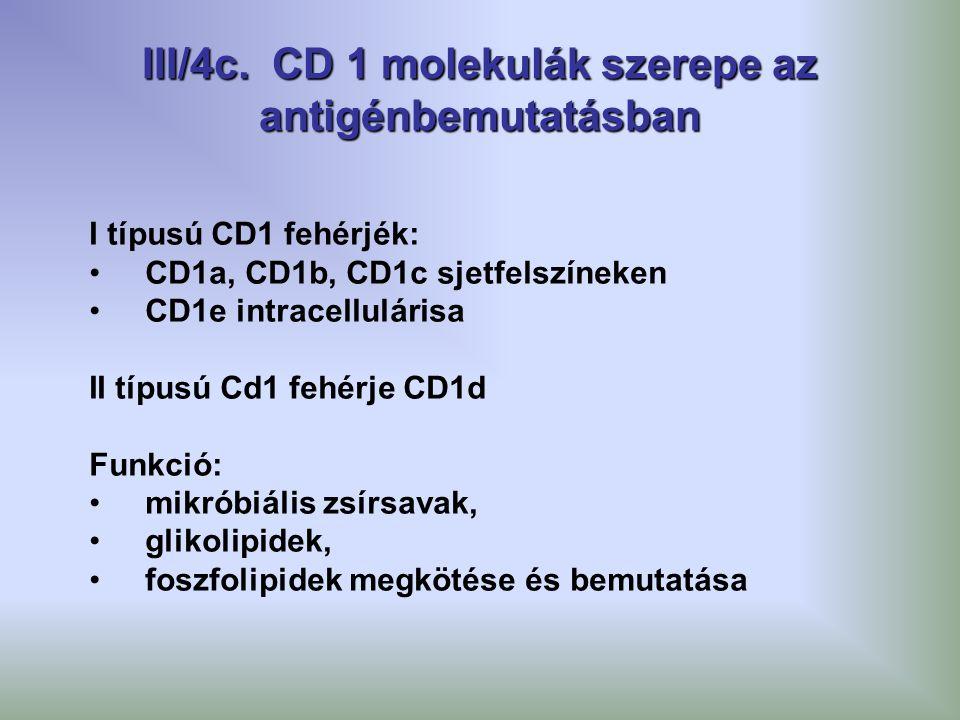 III/4c. CD 1 molekulák szerepe az antigénbemutatásban I típusú CD1 fehérjék: CD1a, CD1b, CD1c sjetfelszíneken CD1e intracellulárisa II típusú Cd1 fehé
