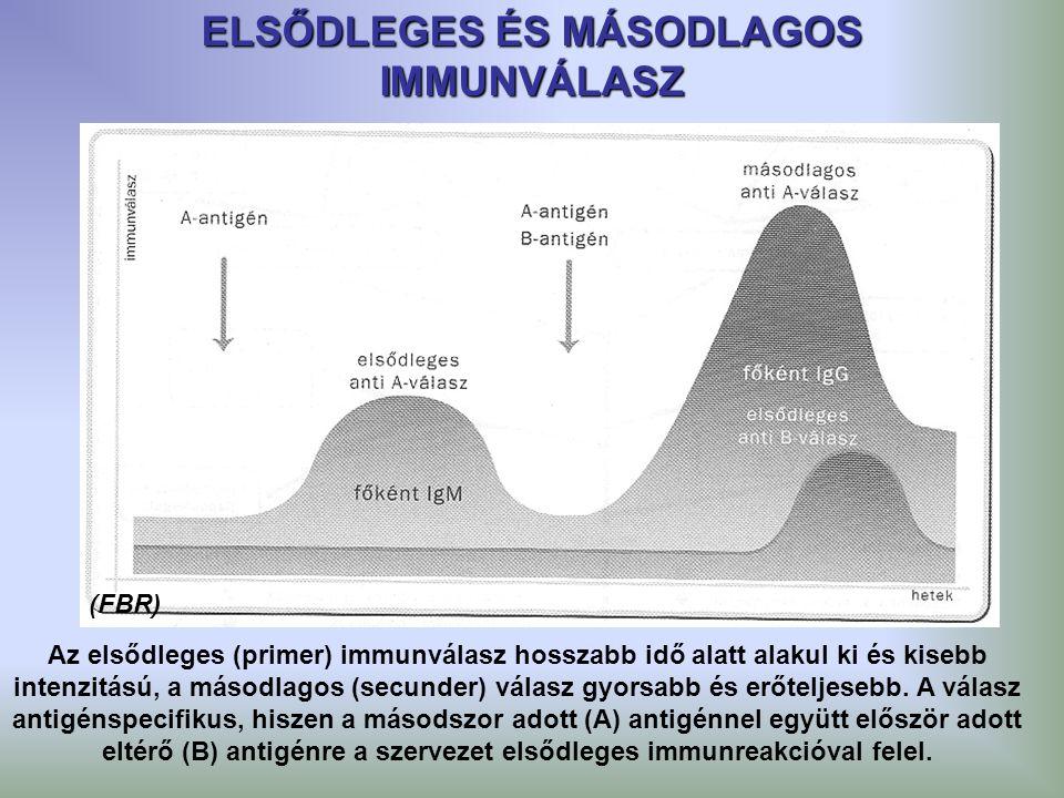ELSŐDLEGES ÉS MÁSODLAGOS IMMUNVÁLASZ Az elsődleges (primer) immunválasz hosszabb idő alatt alakul ki és kisebb intenzitású, a másodlagos (secunder) vá