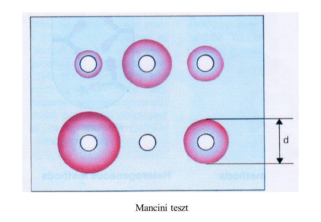 Mancini teszt