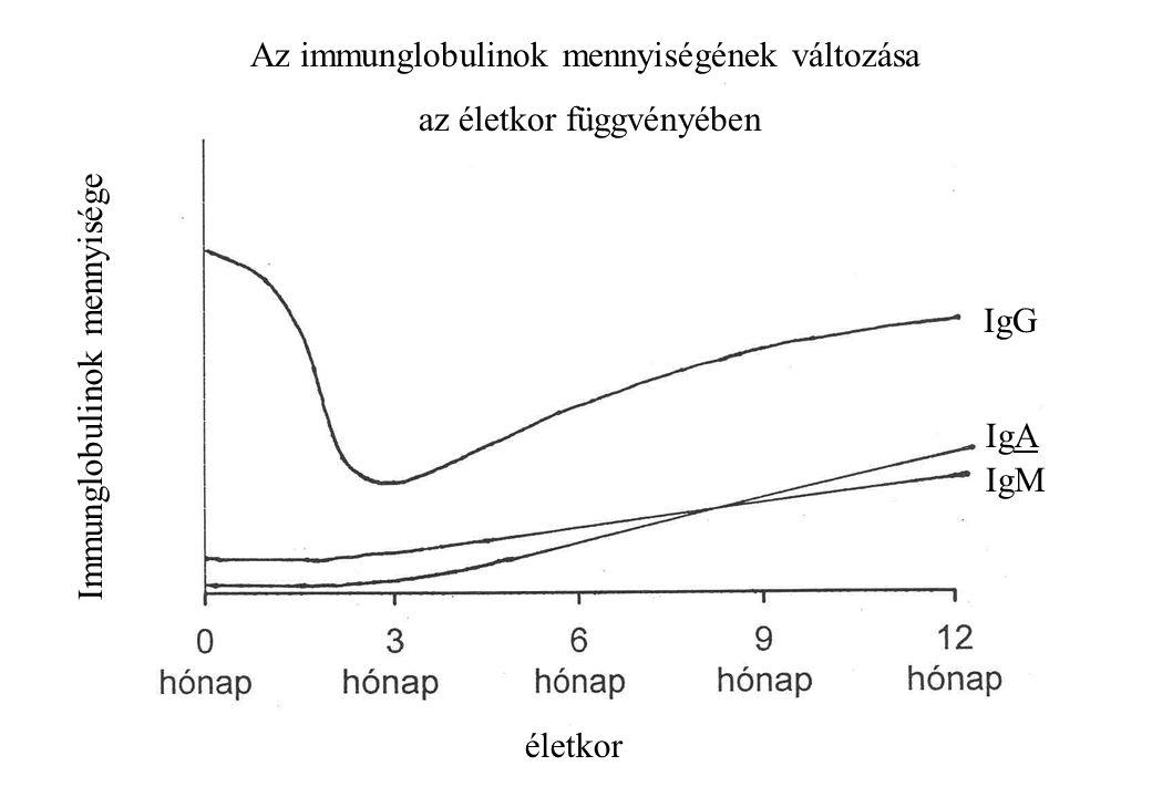 Az immunglobulinok mennyiségének változása az életkor függvényében Immunglobulinok mennyisége életkor IgG IgA IgM