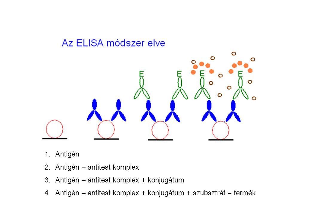 1.Antigén 2.Antigén – antitest komplex 3.Antigén – antitest komplex + konjugátum 4.Antigén – antitest komplex + konjugátum + szubsztrát = termék
