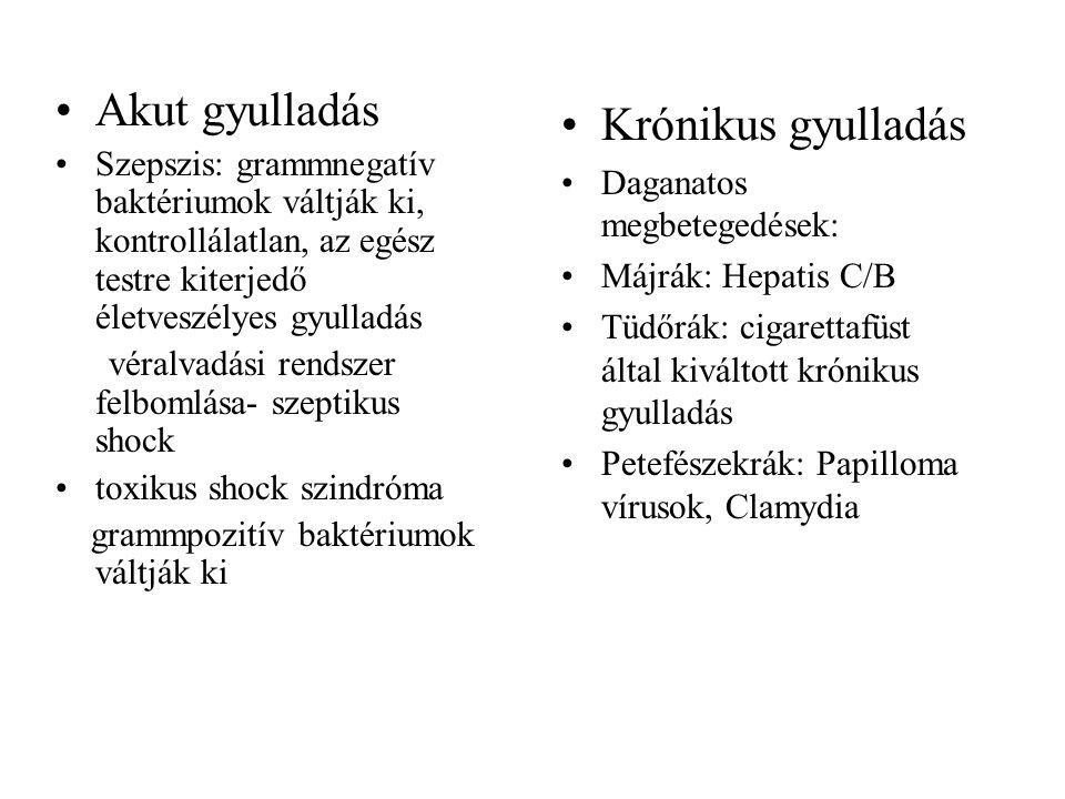 Akut gyulladás Szepszis: grammnegatív baktériumok váltják ki, kontrollálatlan, az egész testre kiterjedő életveszélyes gyulladás véralvadási rendszer