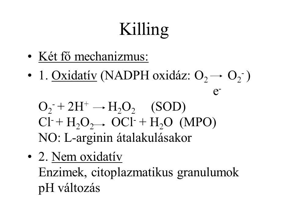 Killing Két fő mechanizmus: 1. Oxidatív (NADPH oxidáz: O 2 O 2 - ) e - O 2 - + 2H + H 2 O 2 (SOD) Cl - + H 2 O 2 OCl - + H 2 O (MPO) NO: L-arginin áta