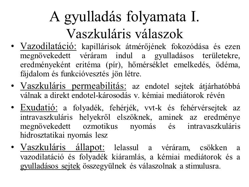 A gyulladás folyamata I. Vaszkuláris válaszok Vazodilatáció: kapillárisok átmérőjének fokozódása és ezen megnövekedett véráram indul a gyulladásos ter