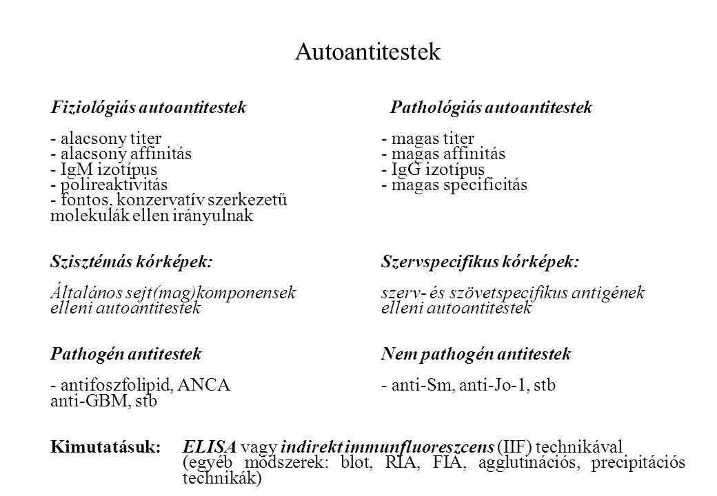Autoantitestek Fiziológiás autoantitestek Pathológiás autoantitestek - alacsony titer- magas titer - alacsony affinitás- magas affinitás - IgM izotípu