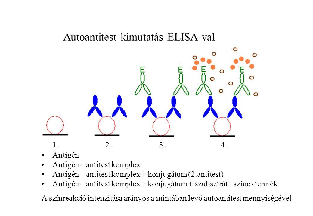 1. 2. 3. 4. Antigén Antigén – antitest komplex Antigén – antitest komplex + konjugátum (2.antitest) Antigén – antitest komplex + konjugátum + szubsztr