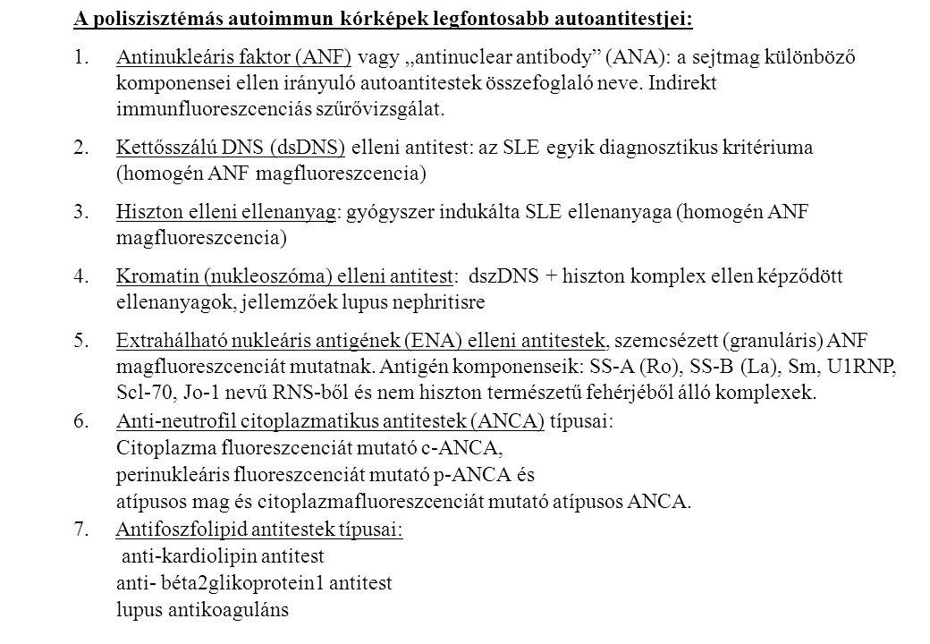 """A poliszisztémás autoimmun kórképek legfontosabb autoantitestjei: 1.Antinukleáris faktor (ANF) vagy """"antinuclear antibody"""" (ANA): a sejtmag különböző"""