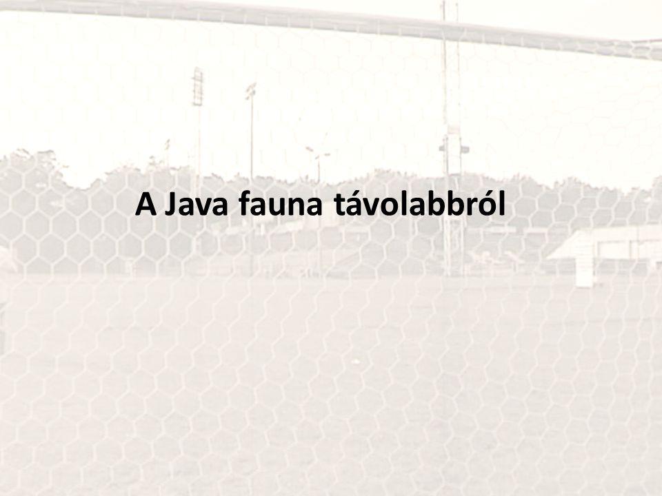 A Java fauna távolabbról