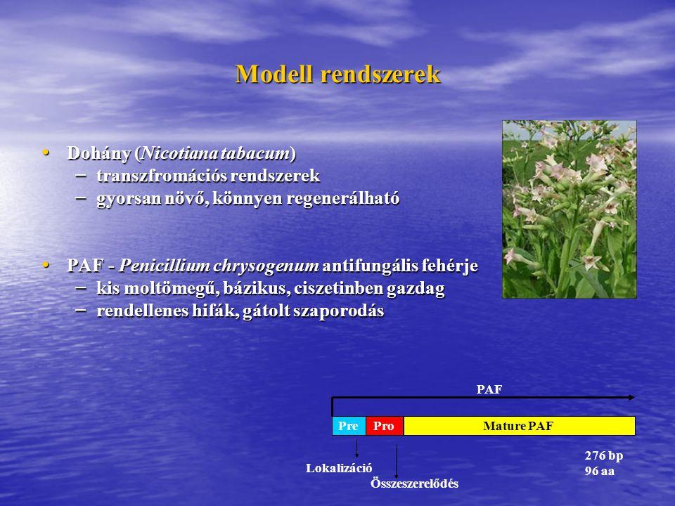 Modell rendszerek Dohány (Nicotiana tabacum) Dohány (Nicotiana tabacum) – transzfromációs rendszerek – gyorsan növő, könnyen regenerálható PAF - Penicillium chrysogenum antifungális fehérje PAF - Penicillium chrysogenum antifungális fehérje – kis moltömegű, bázikus, ciszetinben gazdag – rendellenes hifák, gátolt szaporodás 276 bp 96 aa Lokalizáció Összeszerelődés PAF PreMature PAFPro