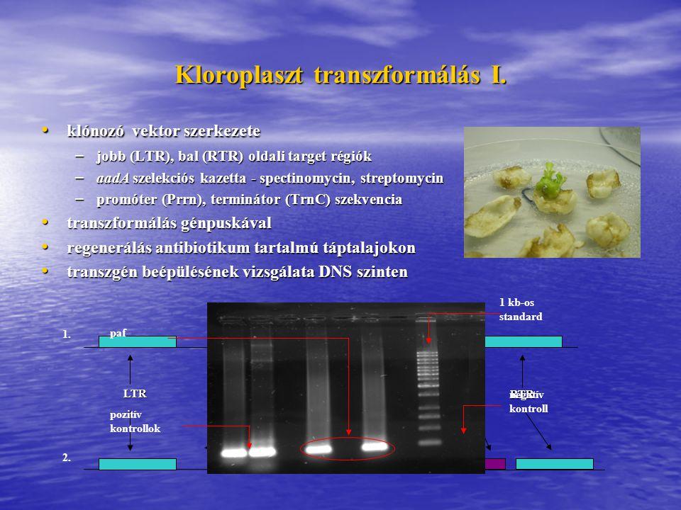 Kloroplaszt transzformálás I.Prrn aadA szelekciós kazetta Mature PAF trnC RTR LTR Pro 1.