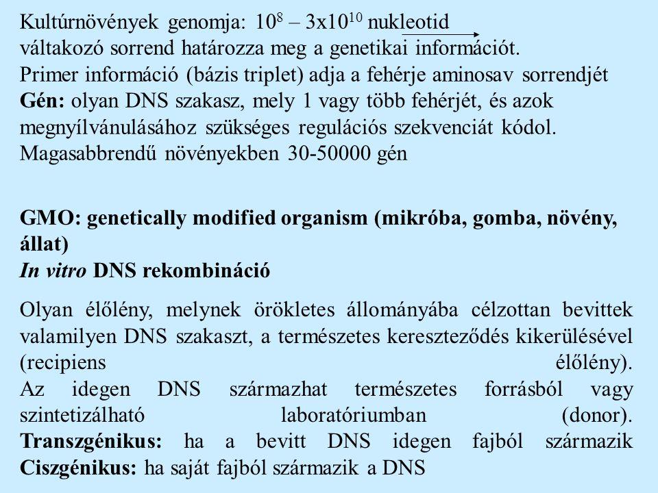 In vitro DNS rekombináció alapfogalmai Restrikciós endonukleázok = restrikciós enzimek: olyan enzimek, melyek bizonyos DNS szakaszokat felismernek és elvágják (60-as években fedezték fel: baktériumok képesek ellenállni bakteriofág fertőzéssel szemben, feldarabolják a DNS-t)