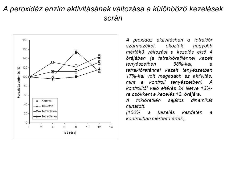 A peroxidáz enzim aktivitásának változása a különböző kezelések során A proxidáz aktivitásban a tetraklór származékok okoztak nagyobb mértékű változást a kezelés első 4 órájában (a tetraklóretilénnel kezelt tenyészetben 38%-kal, a tetraklóretánnal kezelt tenyészetben 17%-kal volt magasabb az aktivitás, mint a kontroll tenyészetben).
