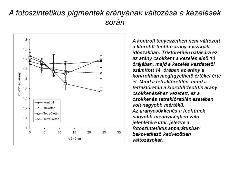 A fotoszintetikus pigmentek arányának változása a kezelések során A kontroll tenyészetben nem változott a klorofill:feofitin arány a vizsgált időszakban.