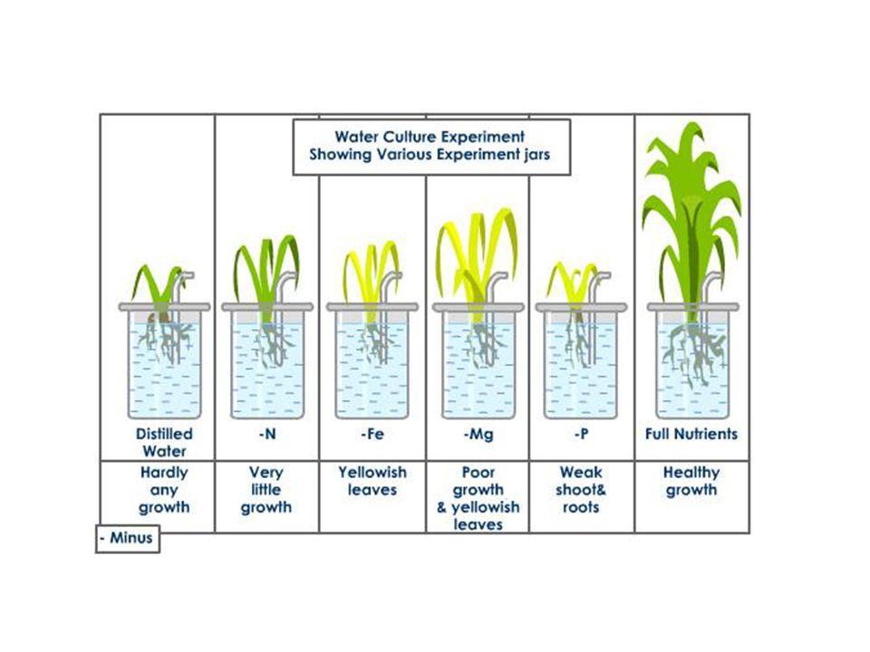 A növényi tápelemek