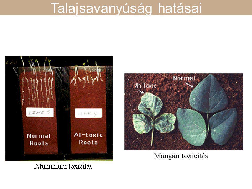 Hogyan befolyásolja a talaj pH a tápanyagfelvételt