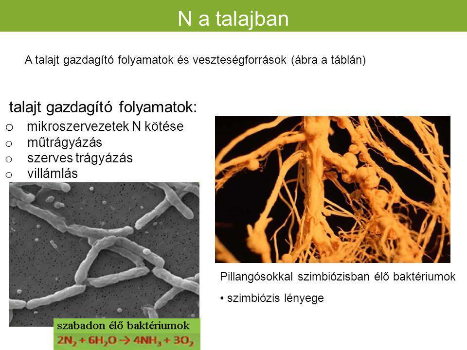 N formák a talajban és mennyiségük A növény számára felvehető nitrogénformák N a talajban