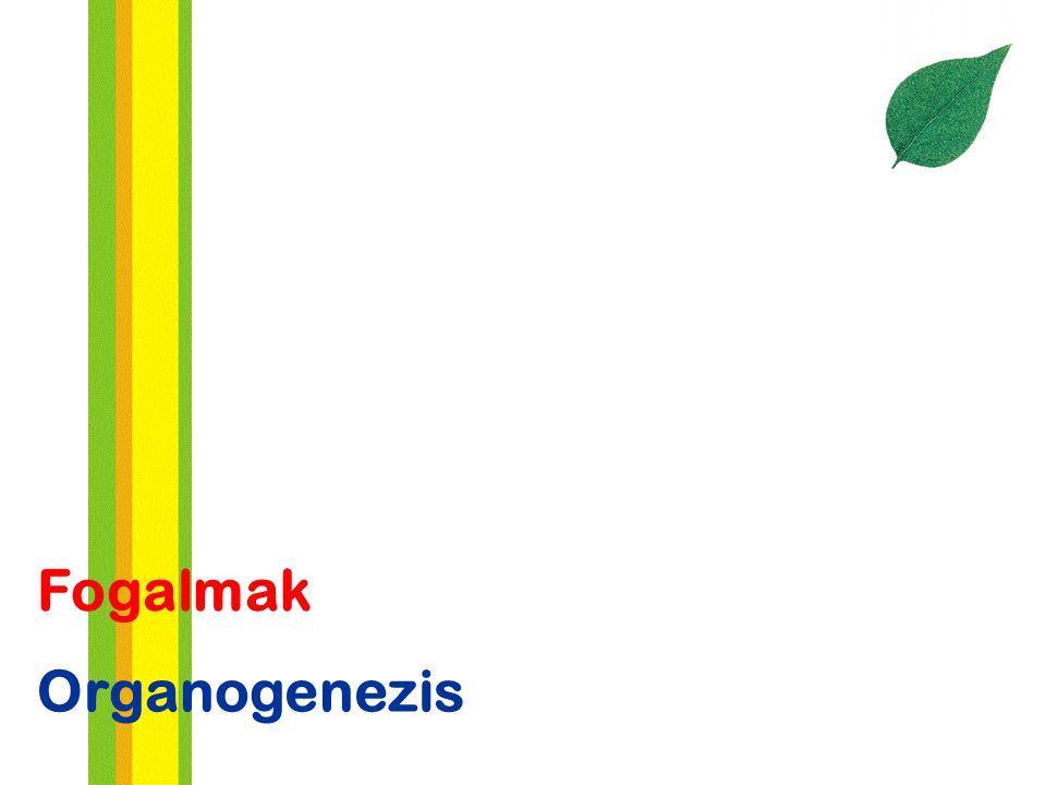 Organogenezis Fogalmak