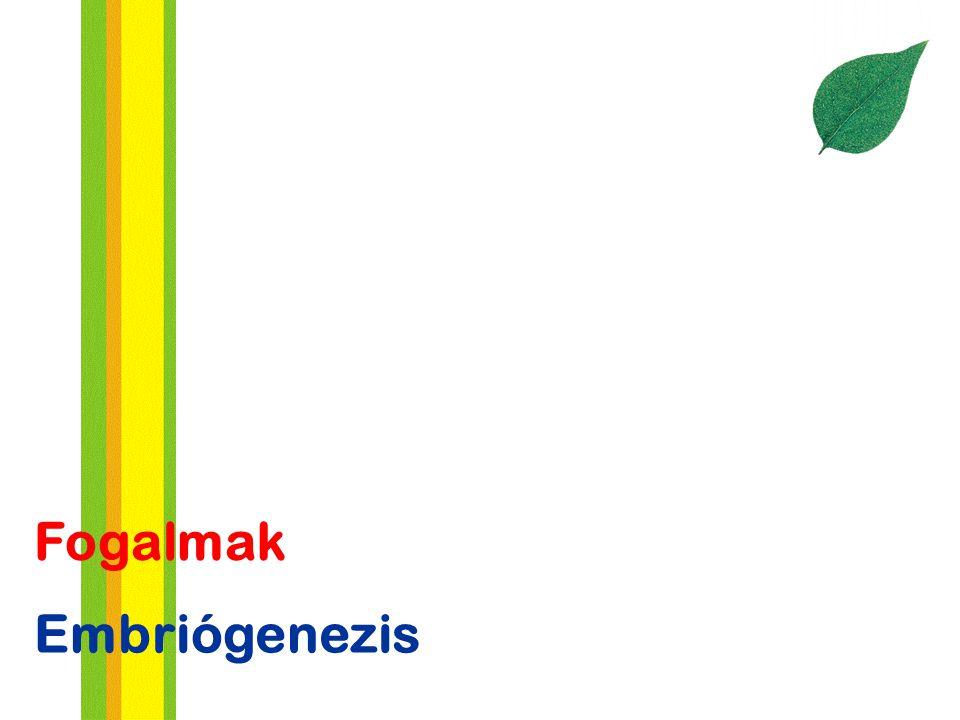 Embriógenezis Fogalmak