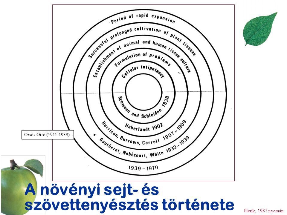 A növényi sejt- és szövettenyésztés története Pierik, 1987 nyomán Orsós Ottó (1911-1939)