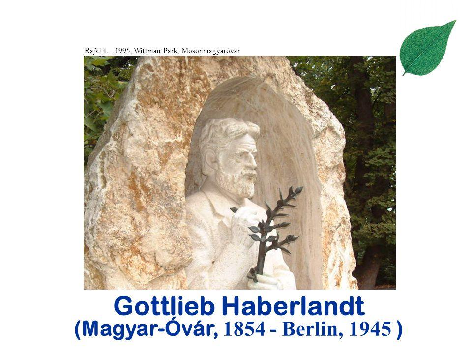 Gottlieb Haberlandt (Magyar-Óvár, 1854 - Berlin, 1945 ) Rajki L., 1995, Wittman Park, Mosonmagyaróvár