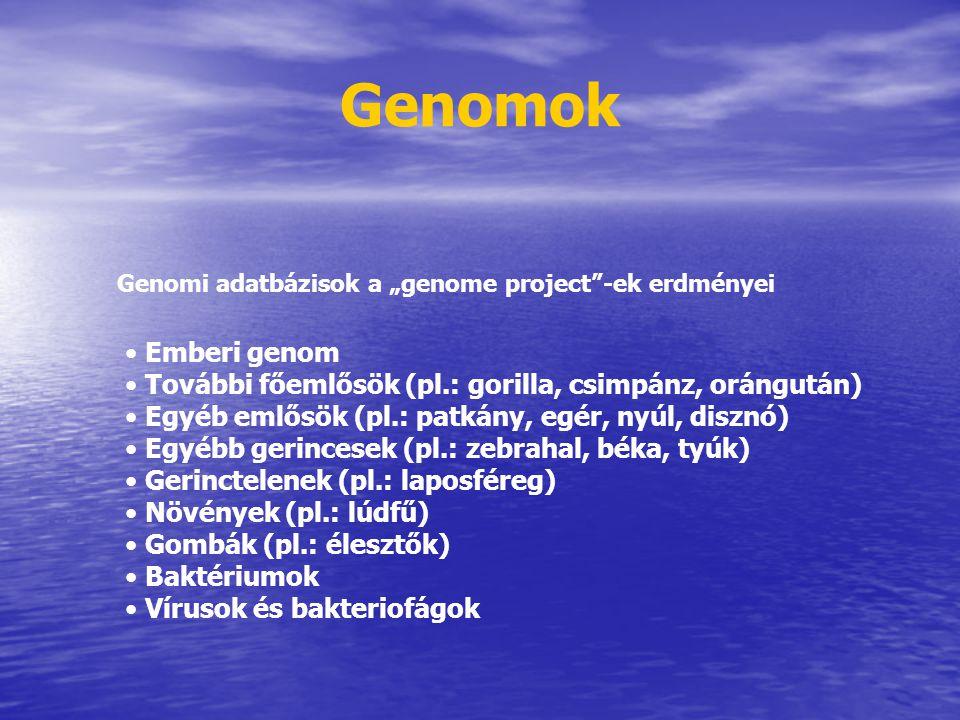 """Genomok Genomi adatbázisok a """"genome project""""-ek erdményei Emberi genom További főemlősök (pl.: gorilla, csimpánz, orángután) Egyéb emlősök (pl.: patk"""