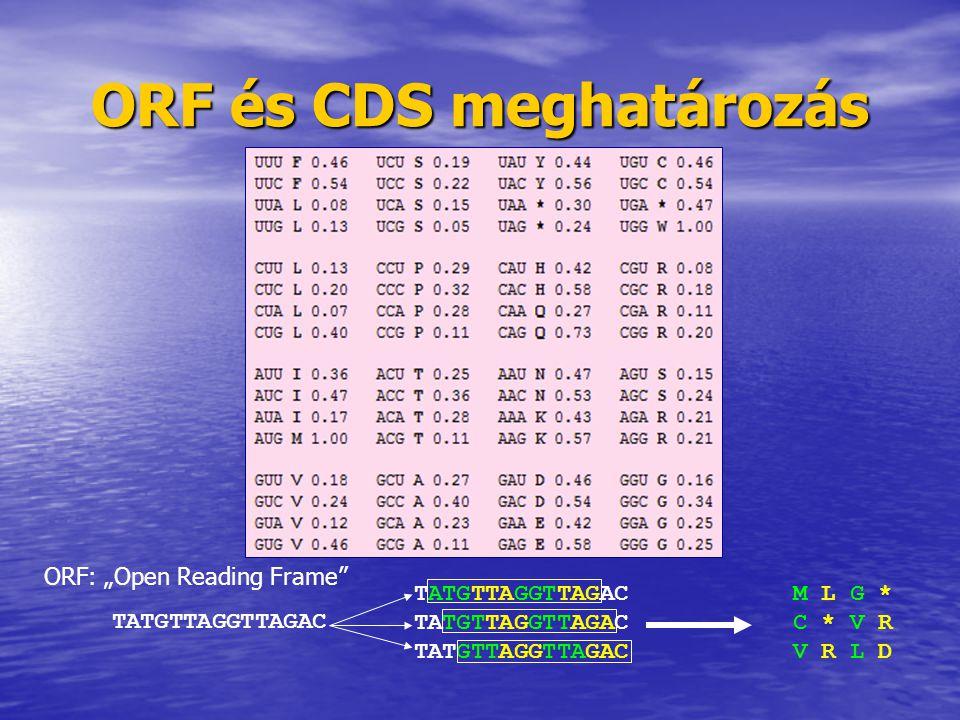 ORF, CDS, protein szekvencia meghatározás 1.START hely (ATG) 2.STOP hely (TAA, TAG) 3.Intron felismerő szekvenciák alapján az intronok megtalálása ORF START STOP Exon 1 Exon 2 Exon 3Intron 1 Intron 2 CDS (feltételezett) fehérje elsődleges és másodlagos szerkezet http://linux1.softberry.com/berry.phtml Exon 1 Exon 2Exon 3