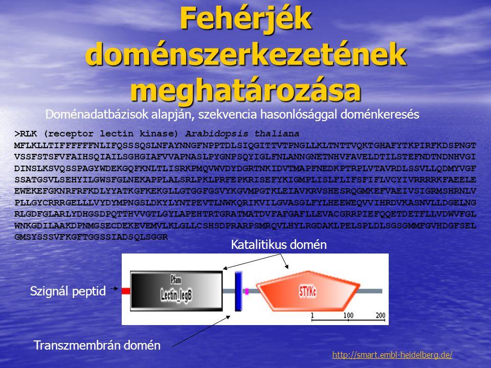 Fehérjék doménszerkezetének meghatározása http://smart.embl-heidelberg.de/ Doménadatbázisok alapján, szekvencia hasonlósággal doménkeresés >RLK (recep