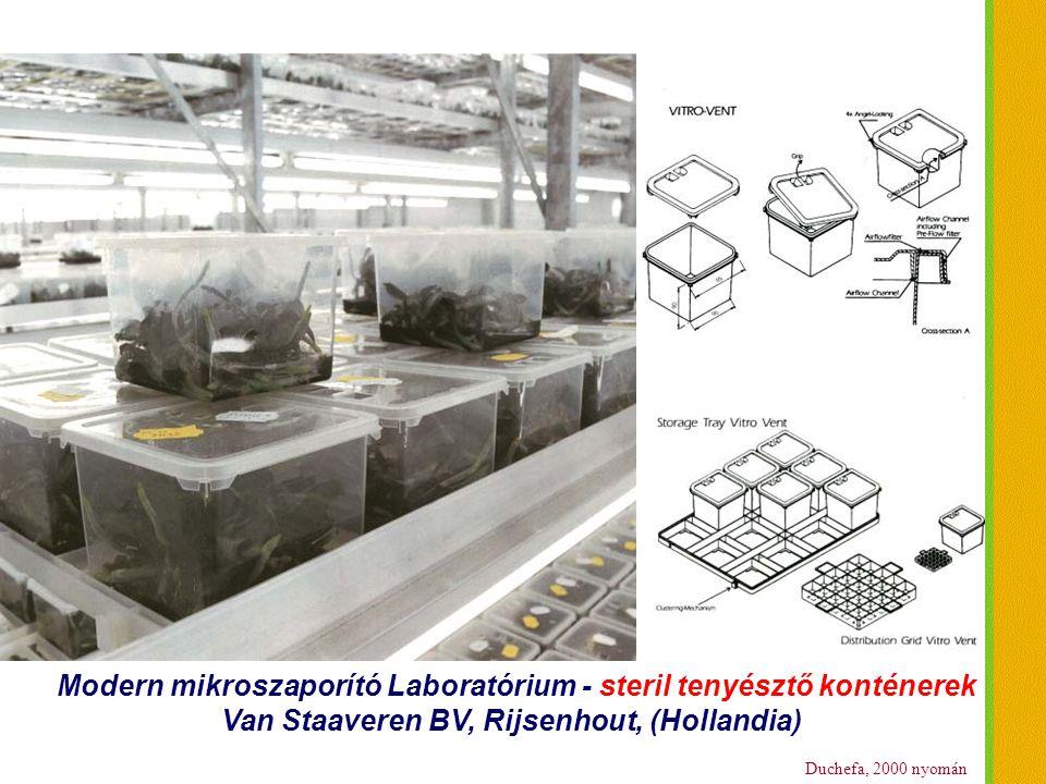 Duchefa, 2000 nyomán Modern mikroszaporító Laboratórium - steril tenyésztő konténerek Van Staaveren BV, Rijsenhout, (Hollandia)