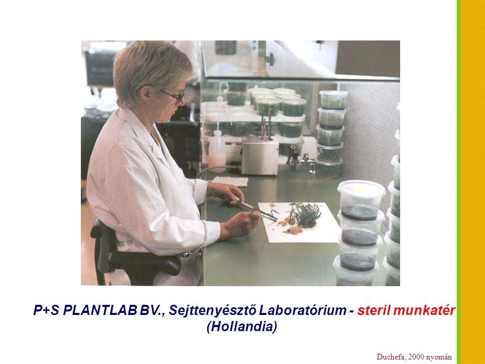 Duchefa, 2000 nyomán P+S PLANTLAB BV., Sejttenyésztő Laboratórium - steril munkatér (Hollandia)