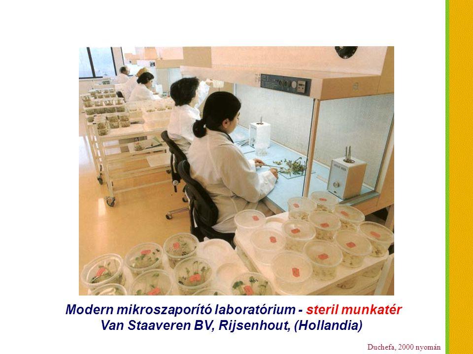 Duchefa, 2000 nyomán Modern mikroszaporító laboratórium - steril munkatér Van Staaveren BV, Rijsenhout, (Hollandia)