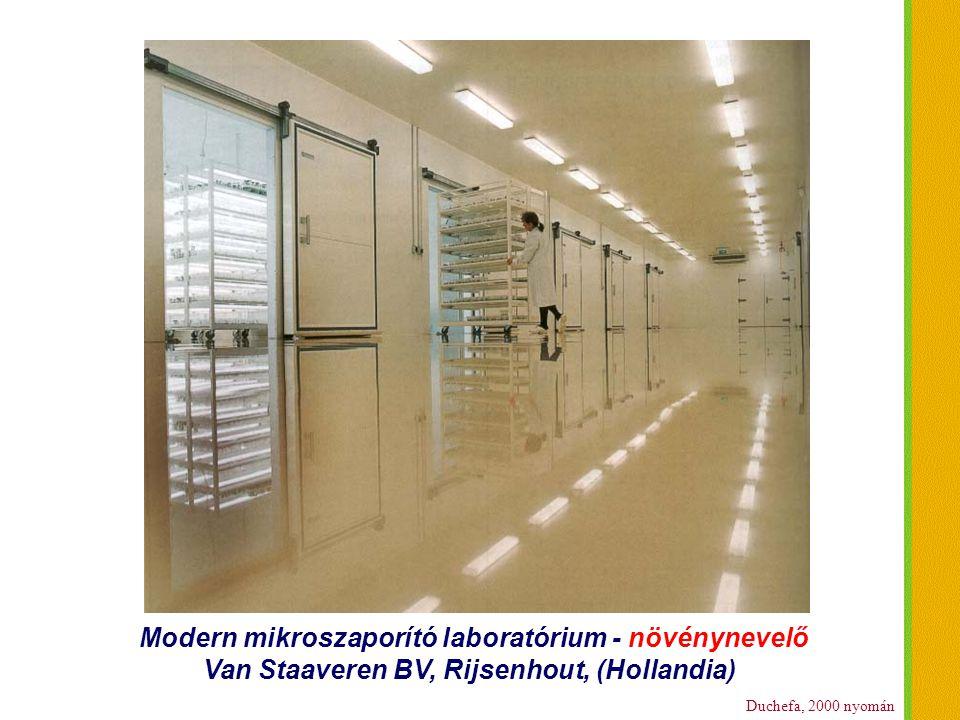 Duchefa, 2000 nyomán Modern mikroszaporító laboratórium - növénynevelő Van Staaveren BV, Rijsenhout, (Hollandia)