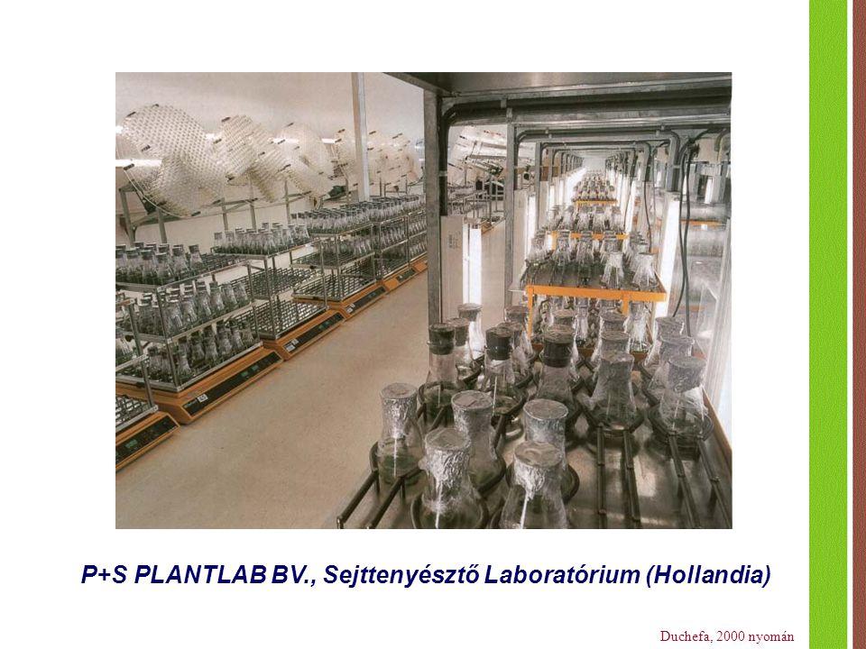 P+S PLANTLAB BV., Sejttenyésztő Laboratórium (Hollandia) Duchefa, 2000 nyomán