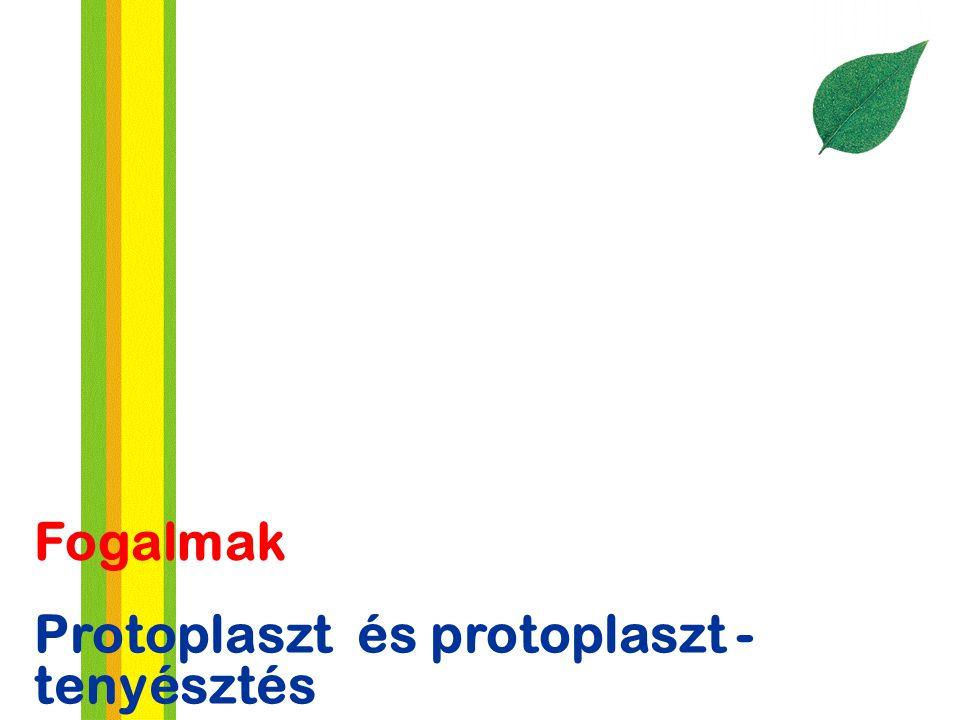 Protoplaszt és protoplaszt - tenyésztés Fogalmak