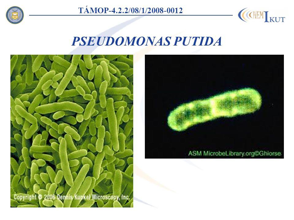 PSEUDOMONAS PUTIDA TÁMOP-4.2.2/08/1/2008-0012