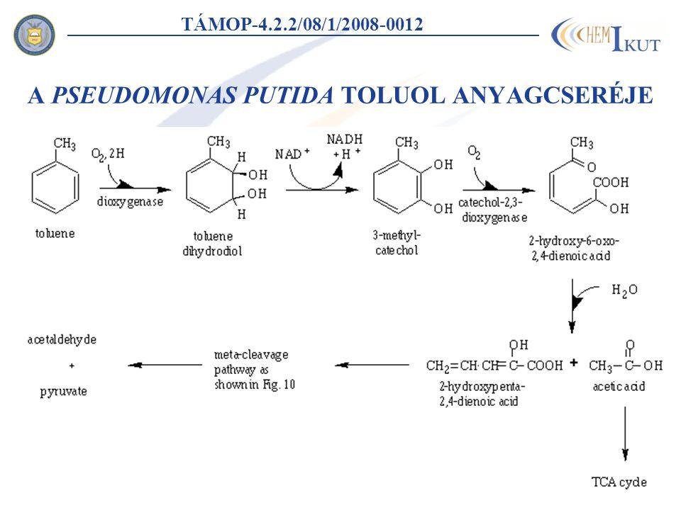 A PSEUDOMONAS PUTIDA TOLUOL ANYAGCSERÉJE TÁMOP-4.2.2/08/1/2008-0012