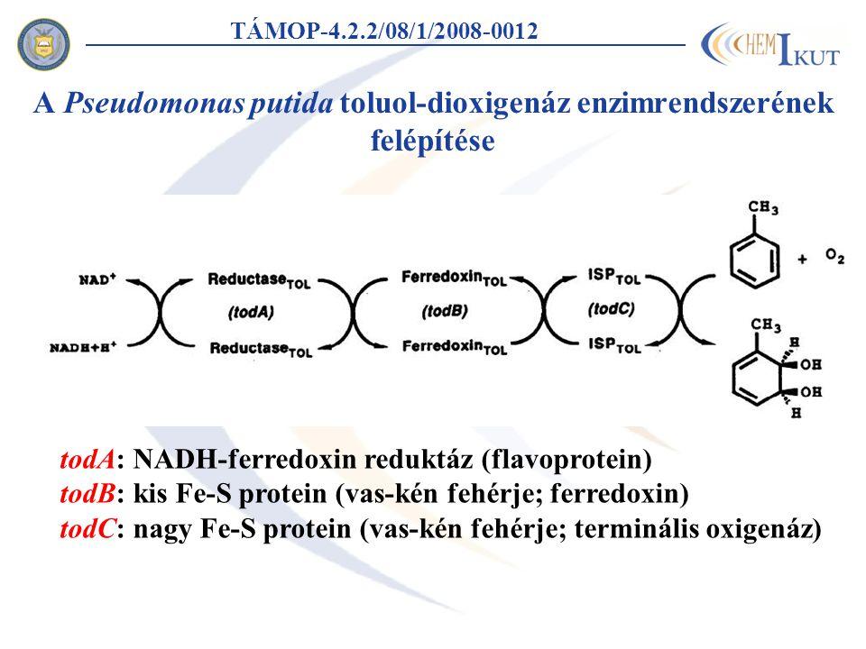 A Pseudomonas putida toluol-dioxigenáz enzimrendszerének felépítése TÁMOP-4.2.2/08/1/2008-0012 todA: NADH-ferredoxin reduktáz (flavoprotein) todB: kis