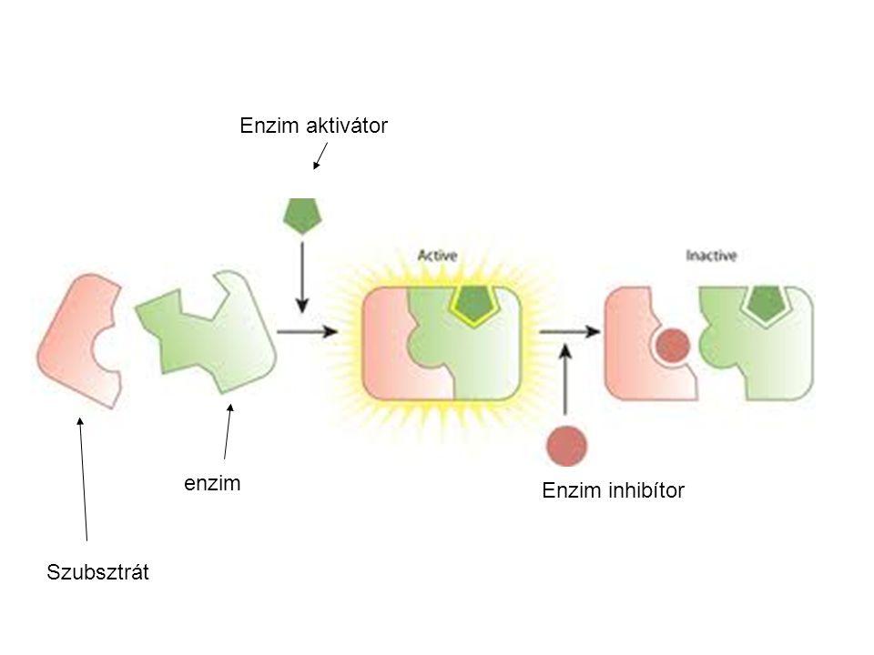 enzim Szubsztrát Enzim aktivátor Enzim inhibítor