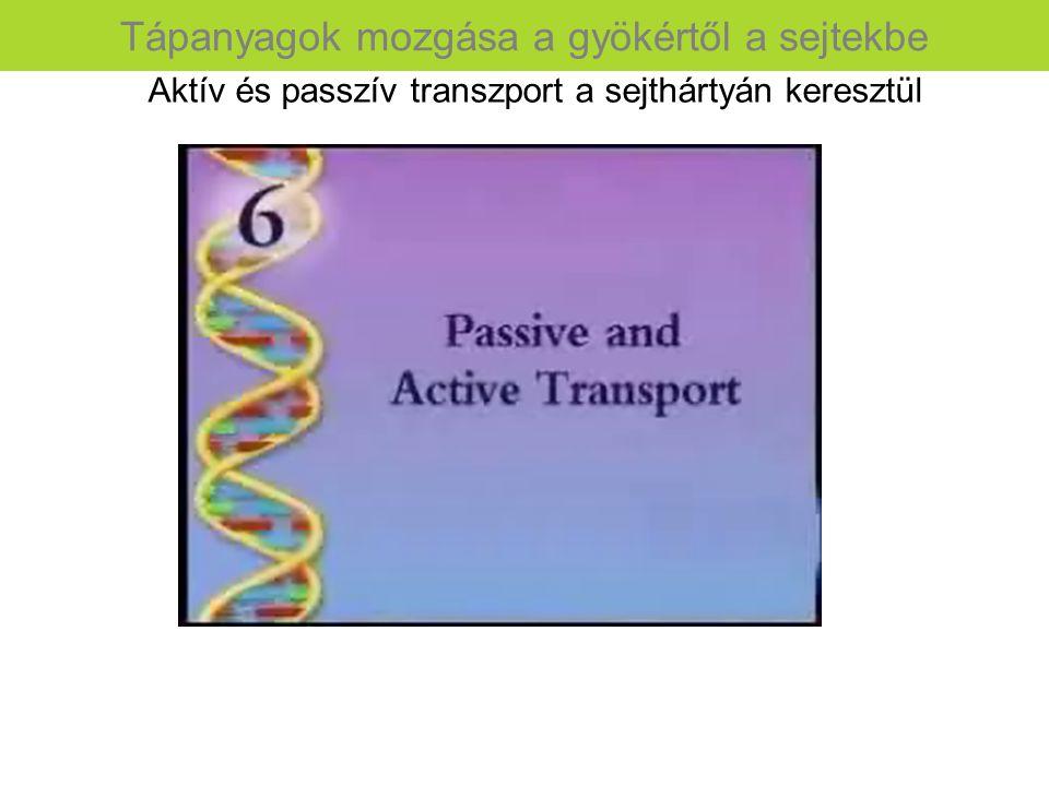Aktív és passzív transzport a sejthártyán keresztül Tápanyagok mozgása a gyökértől a sejtekbe