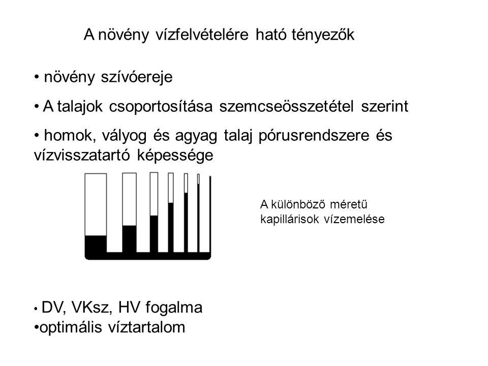 A növény vízfelvételére ható tényezők növény szívóereje A talajok csoportosítása szemcseösszetétel szerint homok, vályog és agyag talaj pórusrendszere és vízvisszatartó képessége DV, VKsz, HV fogalma optimális víztartalom A különböző méretű kapillárisok vízemelése